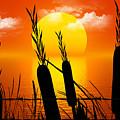 Sunset Lake by Robert Orinski