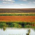 Swamp With Birds Landscape Autumn Season by Goce Risteski