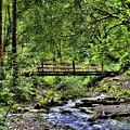 Swan Creek Park by David Patterson