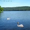 Swan Lake by Teresa Peterson