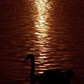 Swan Silhouette by Alex England