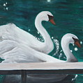 Swans by Taly Bar