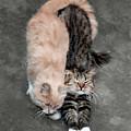 Sweet Couple by Sergey Lukashin