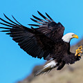 Talons First by Mike Dawson
