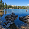 Tamarack Lake by Dianne Phelps