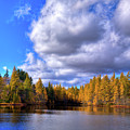 Tamaracks At Woodcraft Camp by David Patterson
