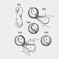 Tennis Ball Patent 1914 by Claire  Doherty