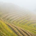Terrace Fields Scenery In Autumn by Carl Ning