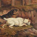 Terriers Ratting by Alfred Wheeler