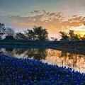 Texas Bluebonnets by Mark Alder