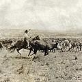 Texas: Cowboy, C1908 by Granger