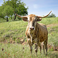 Texas Longhorn by Lawrence Burry
