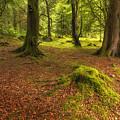 The Ardgartan Forest by Len Brook