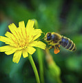 The Bee by Mitch Shindelbower