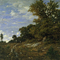 The Edge Of The Woods At Monts-girard, Fontainebleau Forest by Theodore Rousseau