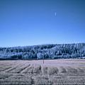 The Field by Jouko Lehto