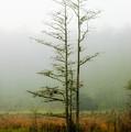 The Foggy Dew by Rich Leighton