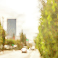 The Hedge By The Sidewalk During Day In The City Of Los Angeles by Eiko Tsuchiya