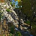 The Hidden Garden by Lenore Senior