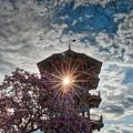 The Light Through The Pagoda by Mark Dodd