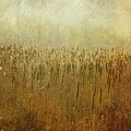 The Marsh by Mary Machare