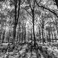 The Monochrome Forest by David Pyatt