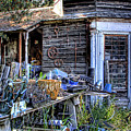 The Old Shed by David Patterson