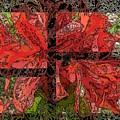 The Rhody 02 by Tim Allen