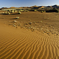 The Sands Of Sossusvlei by Michele Burgess