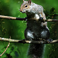 The Squirrel From Fairyland by Angel Ciesniarska