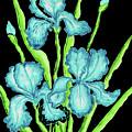 Three  Blue Irises by Irina Afonskaya