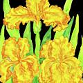 Three Yellow Irises, Painting by Irina Afonskaya