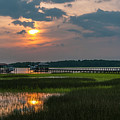 Thriving Beauty Of The Lowcountry by Dale Powell