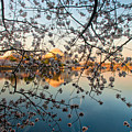 Through The Cherry Tree by Mark Dodd