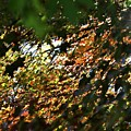 Through The Leaves by LKB Art and Photography