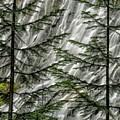 Through The Trees by Dan Leffel