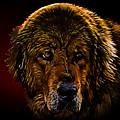 Tibetan Mastiff by Denis Bajan