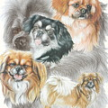 Tibetan Spaniel W/ghost by Barbara Keith
