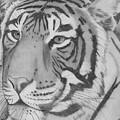 Tigar by Eileen Blair