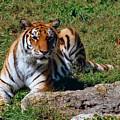 Tiger II by Gary Adkins