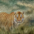 Tiger In The Grass by Teresa Wilson