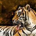 Tiger by Svetlana Sewell
