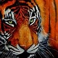 Tiger, Tiger Burning Bright... by Dhammika Bandara