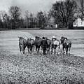 Tilling The Fields by Tom Mc Nemar