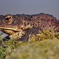 Toad by Gavin MacRae