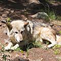 Tour Of Rocky Mountain Wildlife Foundation by Steve Krull