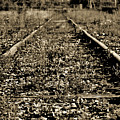 Tracks  To Where by Traci Cottingham