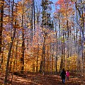 Trail Blazing by Dave Martsolf