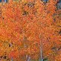 Translucent Aspen Orange by Gary Baird