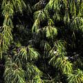 Tree 8 by Kristalin Davis